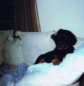 Campino kurz vorm Einschlafen