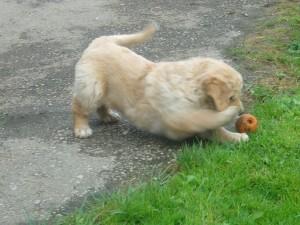 Ball - dableiben!