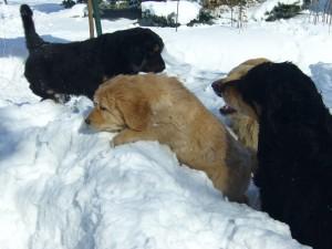 Dele und Diablo - im Schnee laufen ist anstrengend