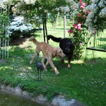 Mit der Schwester im Rosengarten